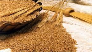 القمح الأوروبى